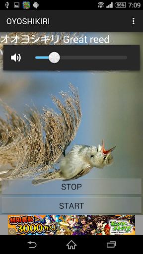鳥鳴き声オオヨシキリ