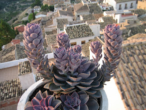 Photo: view from terrace Villa Pico on the village of Sella