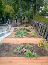 Photo: Looking down the top third of the Hidden Garden Steps site (16th Avenue, between Kirkham and Lawton streets in San Francisco's Inner Sunset District): newly-installed terracing as part of erosion-control efforts completed by the San Francisco Department of Public Works; California natives donated by the Nature in the City Green Hairstreak [Butterfly] Corridor project reinstalled by volunteers. More erosion-control and planting in the works before the Hidden Garden Steps 148-step ceramic-tile mosaic designed and created by artists Aileen Barr and Colette Crutcher is installed. For more information about this volunteer-driven community-based project supported by the San Francisco Parks Alliance, the San Francisco Department of Public Works Street Parks Program, and hundreds of individual donors, please visit our website at http://hiddengardensteps.org.