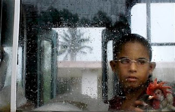 Photo: ** ALTERNATIVE CROP OF HAV105 ** A boy carries a rooster as he is evacuated in a bus to a temporary shelter as Hurricane Gustav approaches in Batabano, Cuba, Saturday, Aug. 30, 2008. Gustav swelled to an increasingly fearsome Category 3 hurricane with winds of 125 mph (205 kph) as it shrieked toward the heartland of Cuba's cigar industry Saturday on a track to hit the U.S. Gulf Coast, three years after Hurricane Katrina.(AP Photo/Javier Galeano)