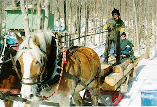 Photo: The horses were a team of Belgium's and were amazing how effortlessly they hauled those logs across the ice and up the hill.