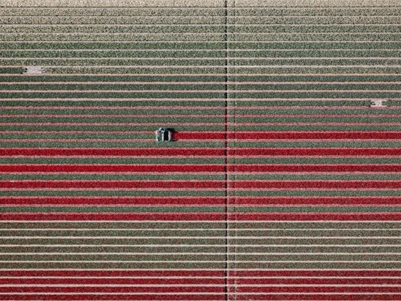 Una impresionante serie fotográfica aérea de los campos de Tulipanes Holandeses