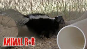 Animal R & R thumbnail