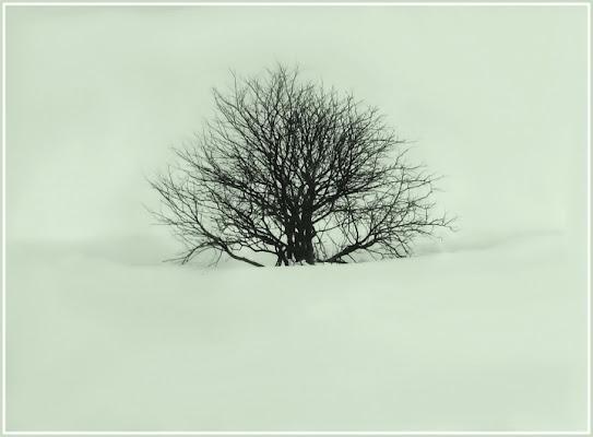 L'albero di Narnia di blanche7