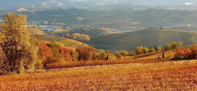 terre da vino di provenza