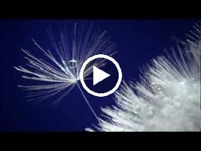 Video: Antonio Vivaldi  La Candace, o Li veri amici (RV 704) - III I Aria [Candace]  Usignoli che piangete -