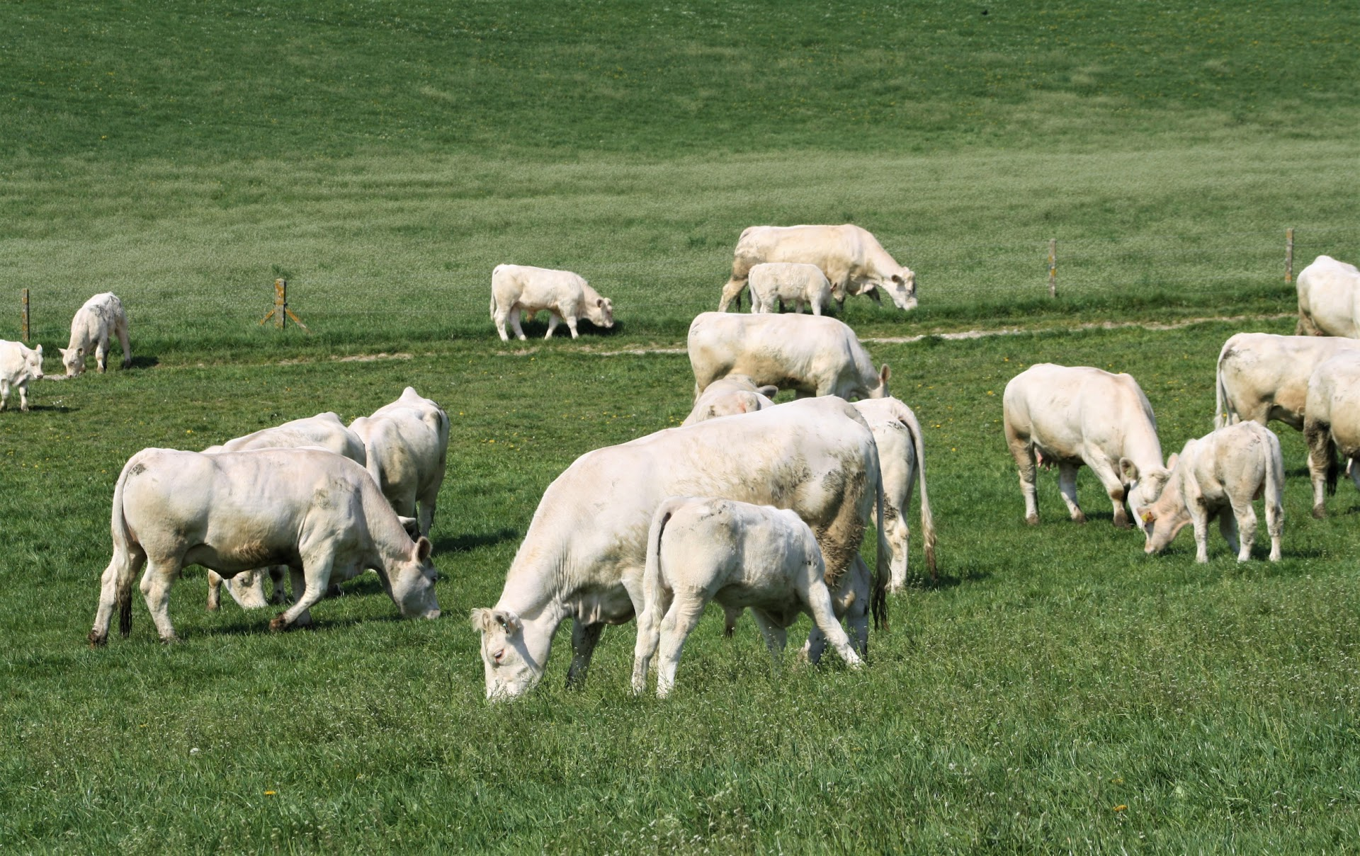 Pâturage du troupeau