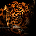 Leopard Silhouette LWP icon