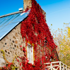 The red wall by Nick Beaudoin - Nature Up Close Leaves & Grasses ( building, maison, pwcautumn-dq, house, leaves, feuille )