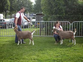 Photo: Ochtend programma volwassen dieren. Klasse 1: 1 jarige toggenburger geiten.  1a. Sarie's Helena JH; 1b. Sarie's Hinke JH;