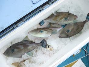 Photo: ・・・しかし、胴つき釣りの方々は。