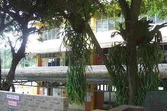 Photo: Bangunan Amanah (4 tingkat) di sebalik rimbunan pohon-pohon di Hidayah. Gambar diambil pada Disember 2010.