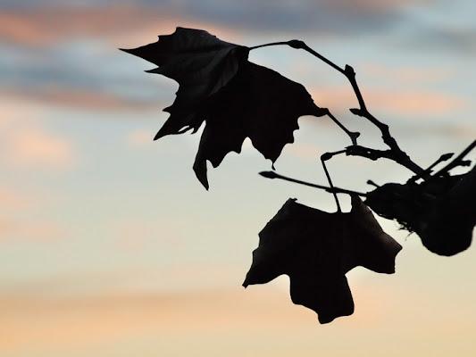 Il tramonto della vita di trentina