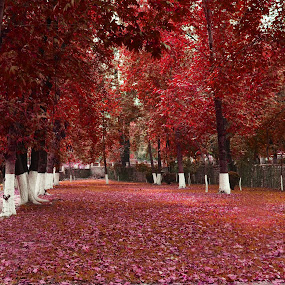 by Sajjad Khan - Nature Up Close Trees & Bushes ( fall leaves on ground, fall leaves )