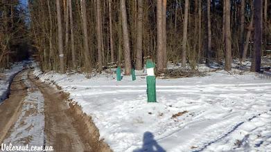 Photo: Лесной автобан развилка