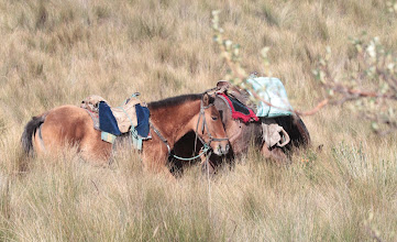 Photo: Andean Horses