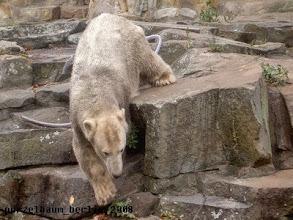 Photo: Und nun hinunter zum Wassergraben ;-)