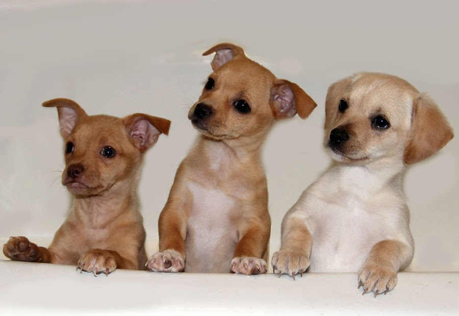 Dumped and Rescued by Nancy Tubb - Animals - Dogs Puppies ( canine, pups, puppies, dogs, puppy,  )