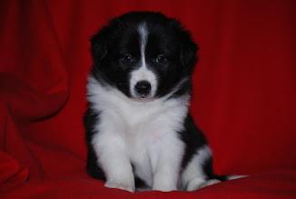Photo: 4,5 weeks old
