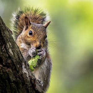 Squirrel snack.jpg