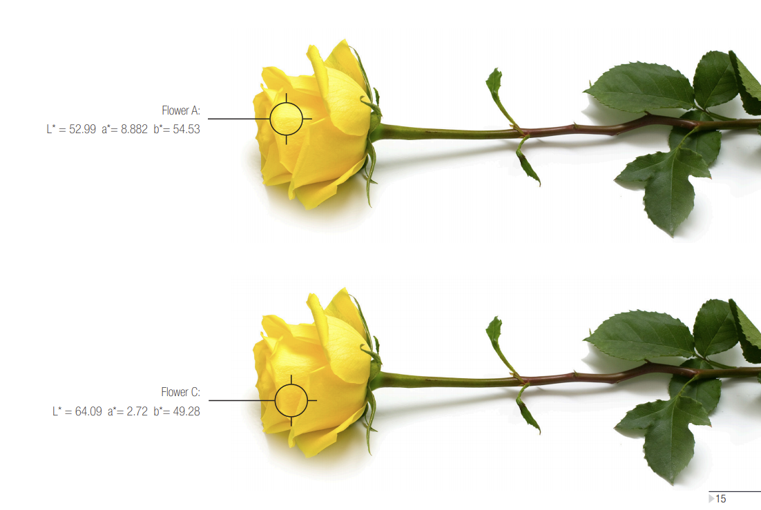 An image of two yellow roses to illustrate Delta E