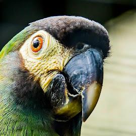 Whats Up ??? by Ken Nicol - Animals Birds (  )
