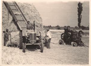 Photo: Kazalrakás-kazalozás. A traktoron Papp Dénes. Nagy Károly, Papp Dénes, Bödök Károly /Alsó falu/, Remisz utáni földön /Likó/