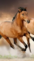 Screenshot of Horse Pictures Live Wallpaper