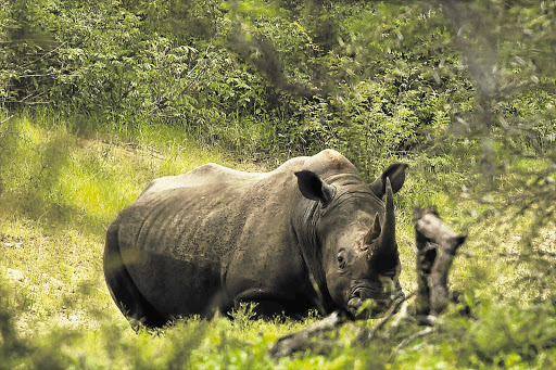SA black rhino find a home in Malawi - TimesLIVE