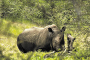Rhino file photo.