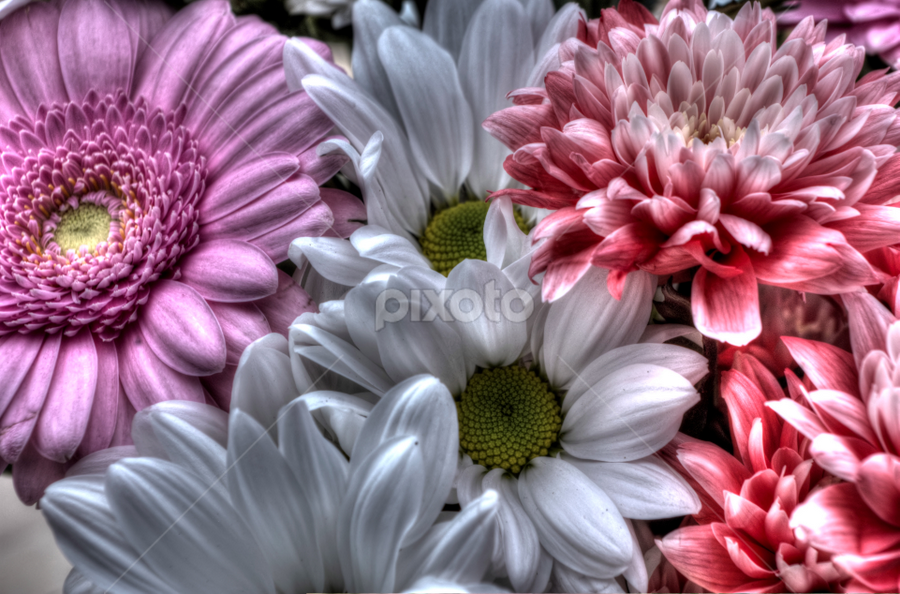 Bouquet by Simon Eastop - Nature Up Close Flowers - 2011-2013 ( colour, bouquet, macro, flowers, closeup )