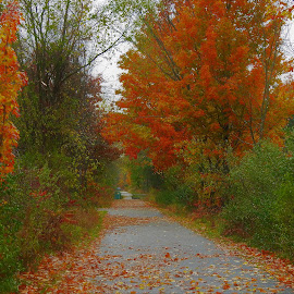Autumn Path by Kathy Woods Booth - Nature Up Close Trees & Bushes ( red, autumn, fall, trees, leaves )