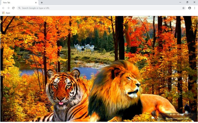Lion & Tiger New Tab & Wallpapers Collection