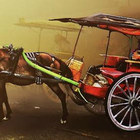 Dokar,  by Abdul Firdausy - Transportation Other