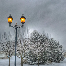 Snowy streetlight by Patti Pappas - City,  Street & Park  Neighborhoods ( michigan, streetlight, green, street, snow, white, trees, light )