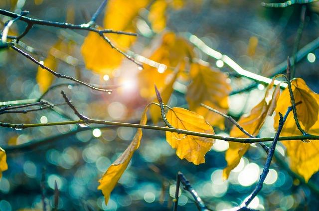 leaf-315370_640.jpg