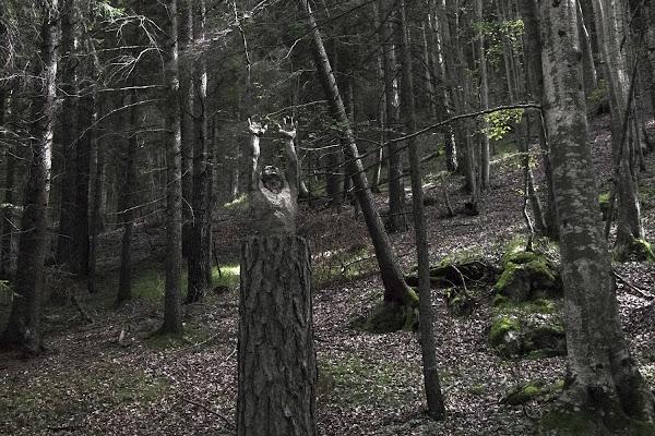 albero-uomo di Zeta & Zeta