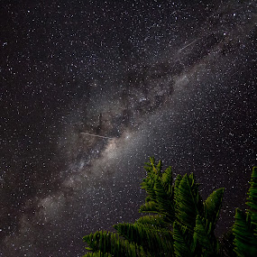 Milky Way over Norfolk Island Pine by Ian Mills - Landscapes Starscapes ( pwcstars )