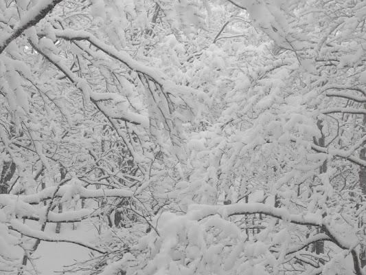 Il soffice abbraccio della neve di LucaMonego