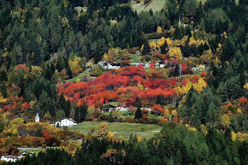 I colori dell'autunno di benny48