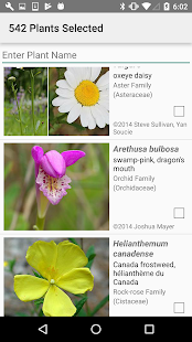 New Jersey Wildflowers- screenshot thumbnail