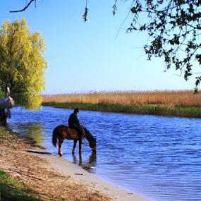 by Simona Hatieganu - Animals Horses
