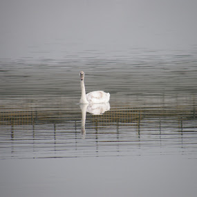by Catalin Petcu - Animals Birds