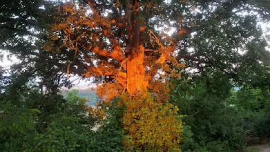 Photo: Der erste Sonnenstrahl in der Eiche. Blick von der Veranda.