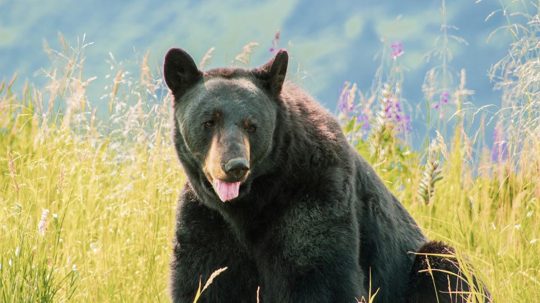 Watch Alaska Animal Rescue live