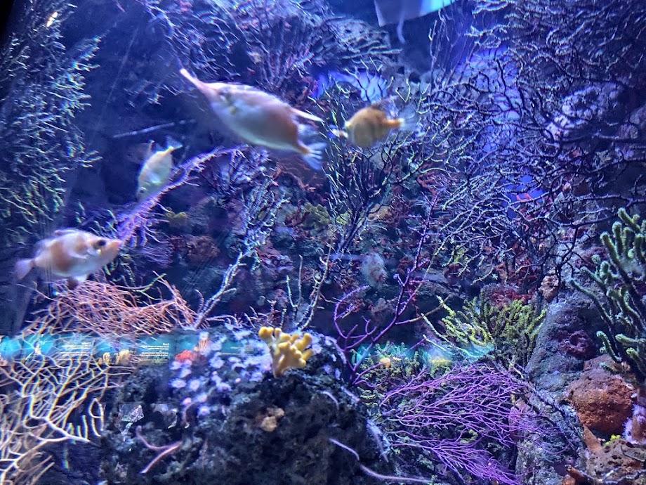 Foto Aquarium - El Acuario de Barcelona 8