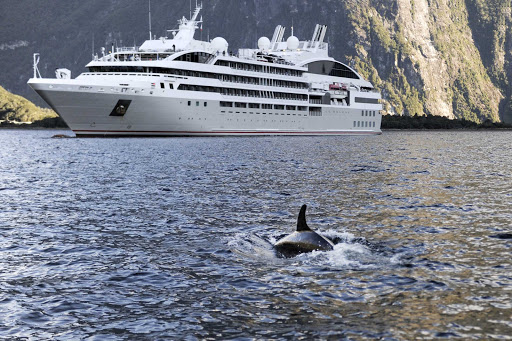 Ponant-LeSoleal-orca.jpg - Watch orca whales from the comfort of Ponant's intimate luxury yacht Le Soleal.