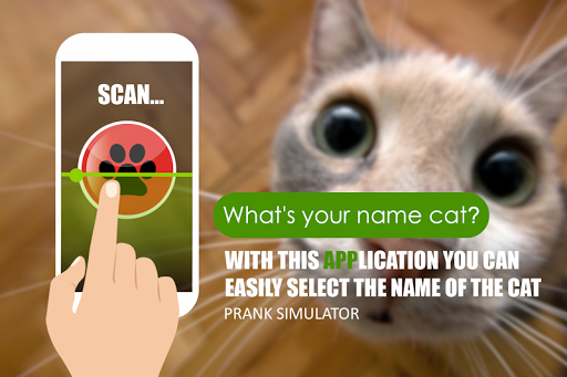 The real name cat scanner