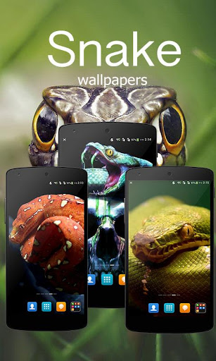 Cool Snake Wallpapers