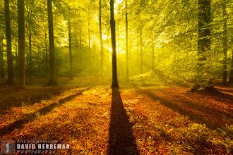 Photo: Autumn Light